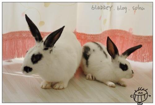 两只小兔子图片大全可爱